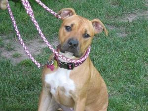 K-9 Perfection, LLC - Dog Obedience Training