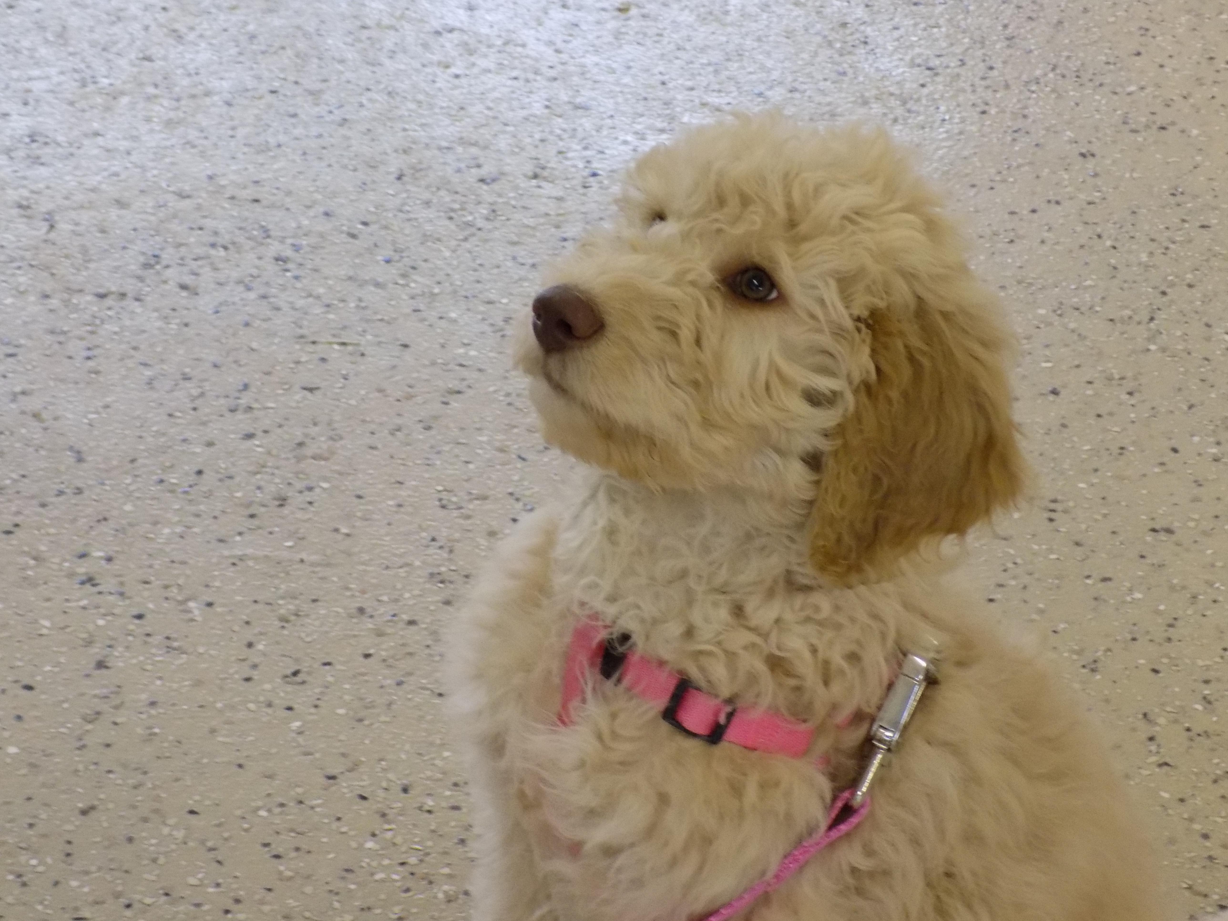 K-9 Perfection, LLC | Dog Obedience Training | Manitowoc