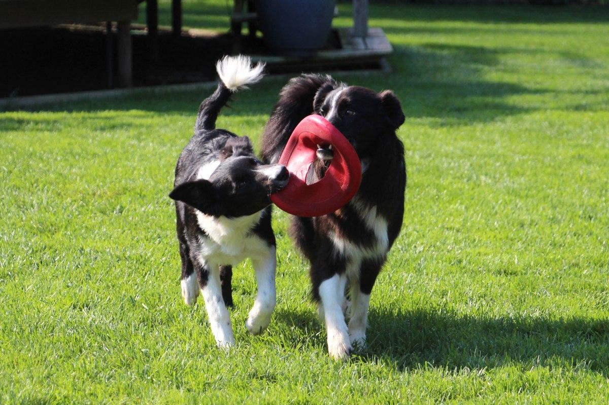 Warm Weather Dog Safety Tips | K-9 Perfection, LLC | Dog Obedience Training | Manitowoc, Wisconsin