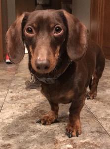 K-9 Perfection, LLC | Dog Obedience Training | Manitowoc, Wisconsin