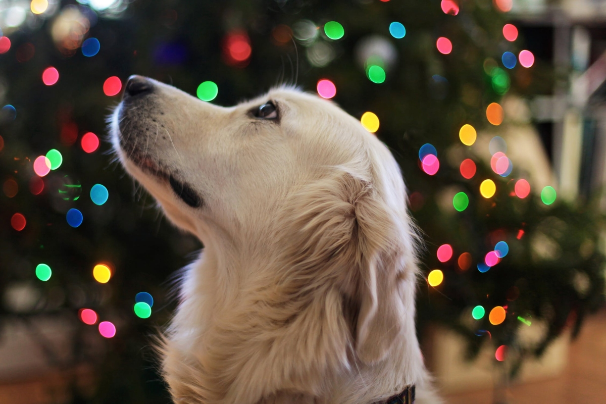 Some New Year's Resolutions to Turn Your Pet In to a New Doggy