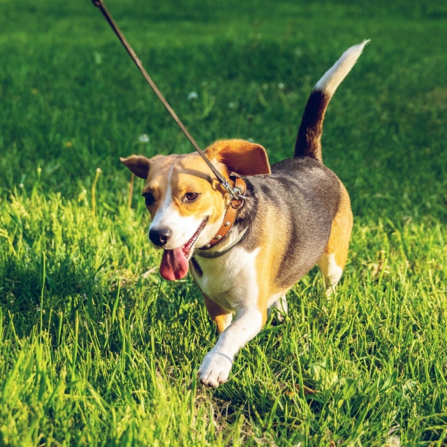 Calling All Hounds! | Understanding Dog Breeds | K-9 Perfection LLC Dog Obedience Training